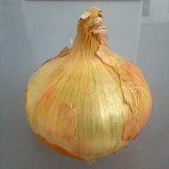 Cebolla de Villafranca. 4Kg. ECOLÓGICA