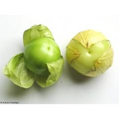 Physalis verde 1 Kg. Fin de temporada