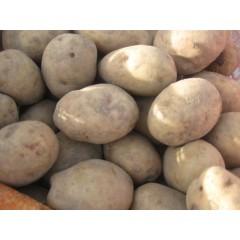 Patata del Bierzo. 5Kg